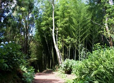 floresta-mato-arvore-arbusto-mata (Foto: José Luís Ávila Silveira/Pedro Noronha e Costa/Wikimedia Commons)