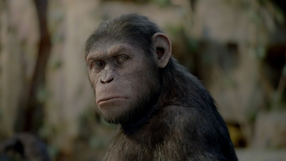 Cesar em Planeta dos Macacos: A Origem (Foto: divulgação)