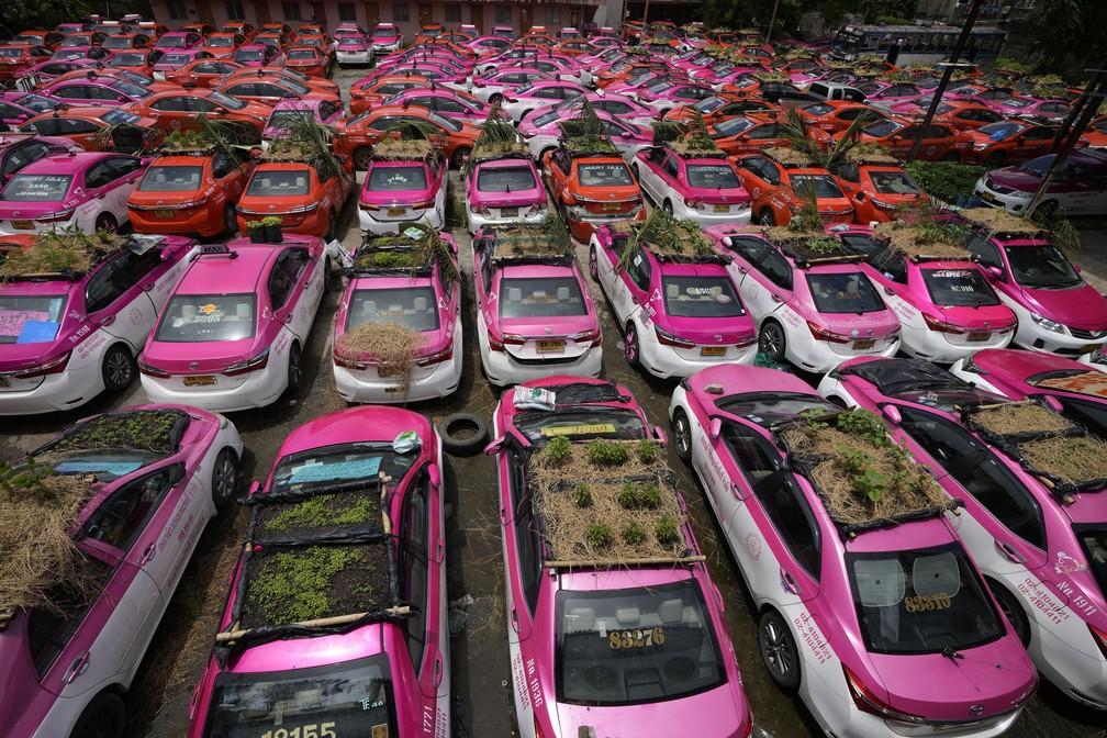 Taxistas da Tailândia montam hortas no teto dos carros — Foto: AP Photo/Sakchai Lalit