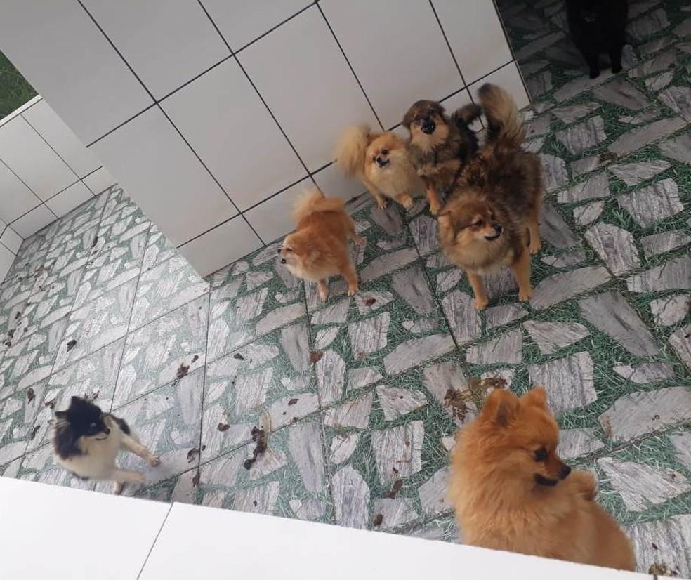 Polícia encontrou mais de mil cães em Piedade — Foto: Divulgação/PM