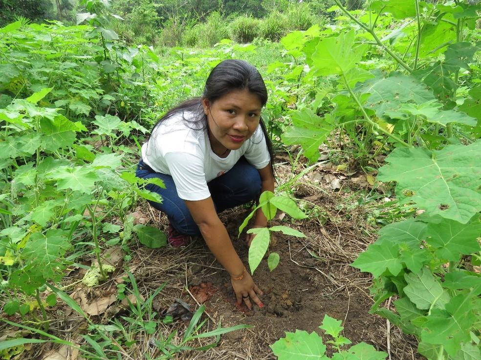 Trabalho é desenvolvido por pesquisadores em conjunto de estudantes do Centro Técnico de Educação Rural Abaitará de Pimenta Bueno. — Foto: Divulgação/Almério C. Gusmão