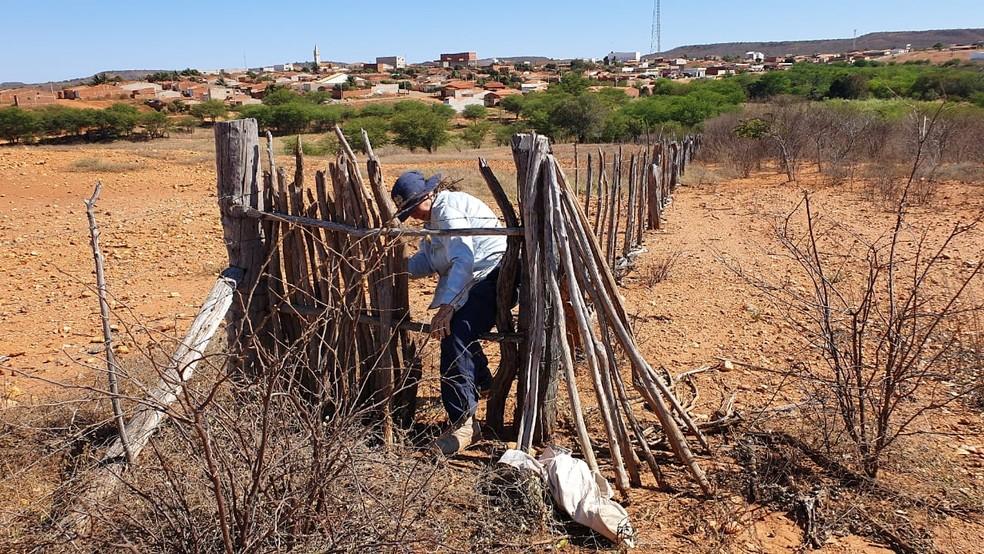 Pesquisadora da UFRJ no sertão de Pernambuco, em Santa Filomena, procurando os meteoritos. — Foto: Reprodução/redes sociais