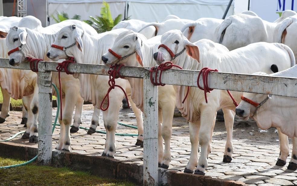 Animais expostos na Tecnoshow podem ser negociados (Foto: Comigo/Divulgação)