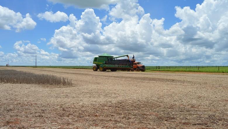 agricultura-soja-colheita (Foto: Vinicius Galera/Ed. Globo)