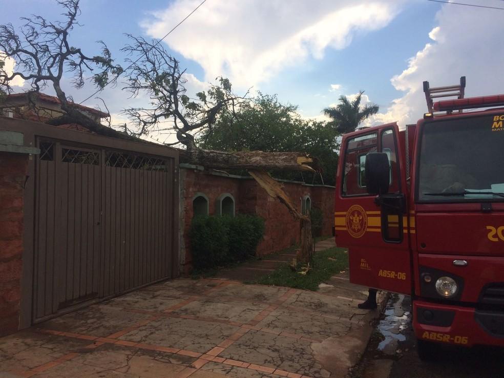 Árvore caiu em residência na capital de MS (Foto: Maureen Mattiello/TV Morena)