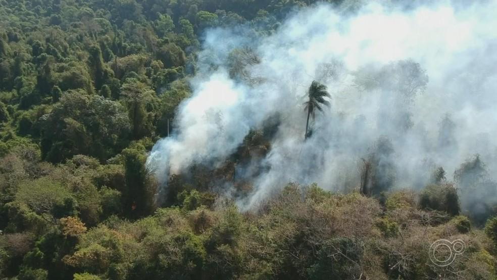 Queimada atingiu área próxima de ONG que cuida de primatas em Itu (SP) — Foto: Reprodução/TV TEM