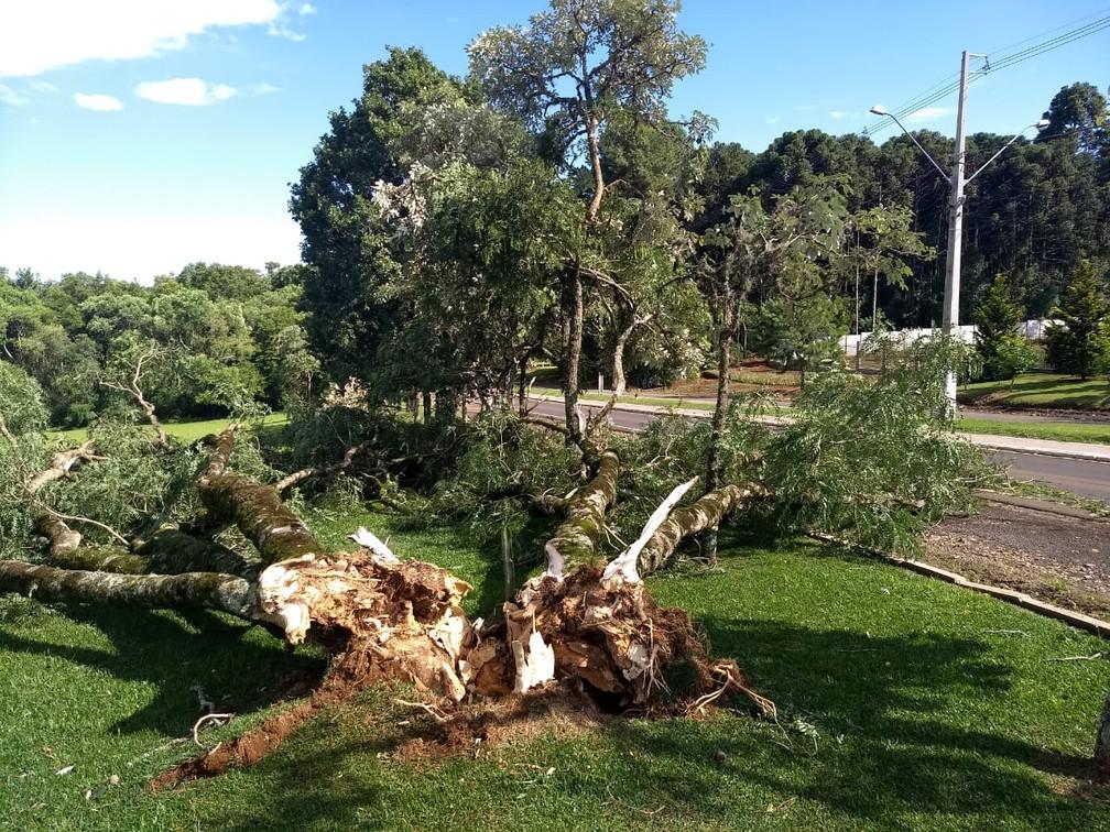 Árvores caíram na Colônia Vitória — Foto: João Quaquio/RPC