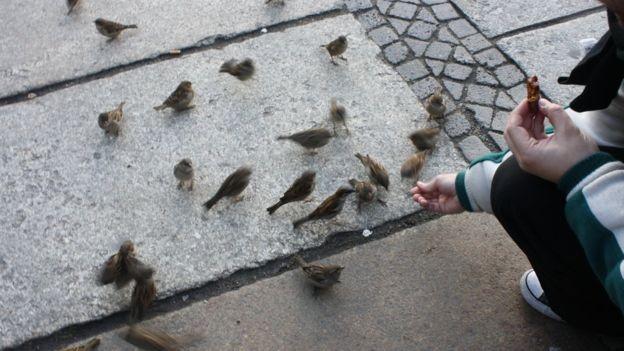 Pássaros encontram ampla oferta de comida nas grandes cidades (Foto: Mariana Veiga via BBC)