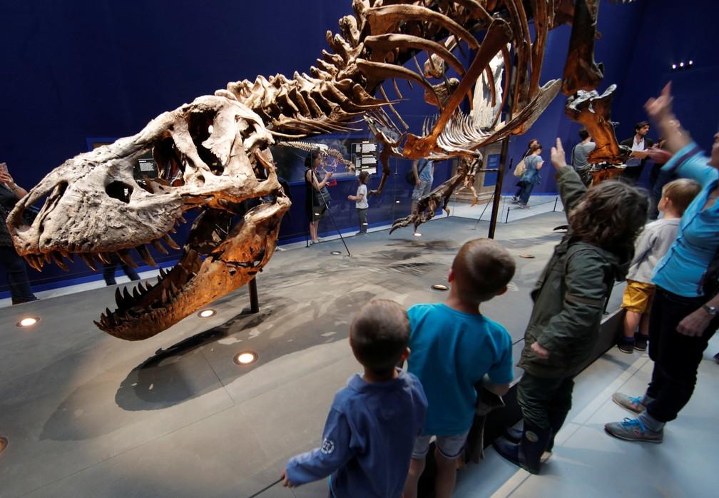 Visitantes observam esqueleto de tiranossauro em primeiro dia de exposição na França (Foto: Philippe Wojazer/Reuters)