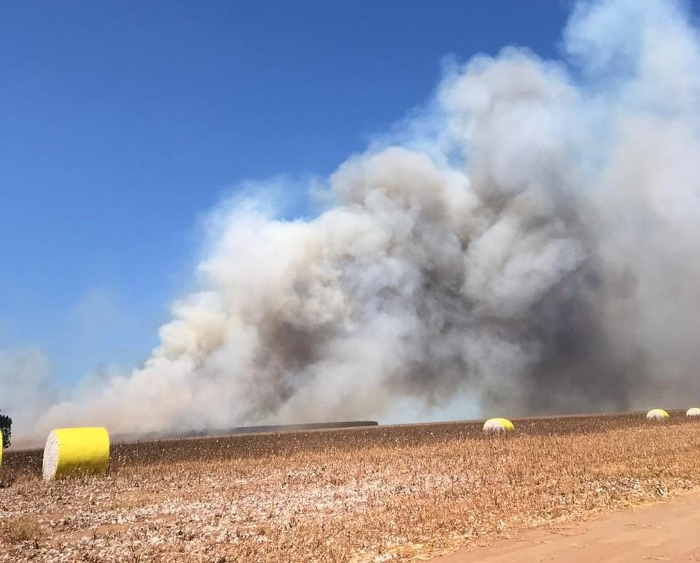 Fogo avançou para plantação de eucalipto — Foto: Waine Charrow/TVCA