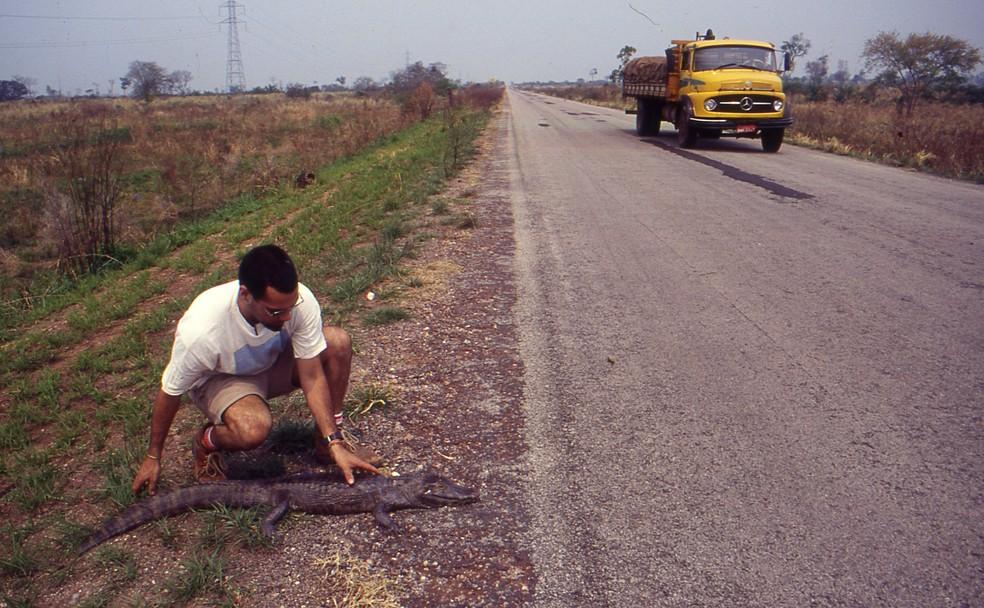 O pesquisador em 1996 encontrou tantos animais mortos na BR-262 que decidiu mudar o tema de sua tese de metrado e estudar o assunto — Foto: Wagner Fischer/Arquivo Pessoal