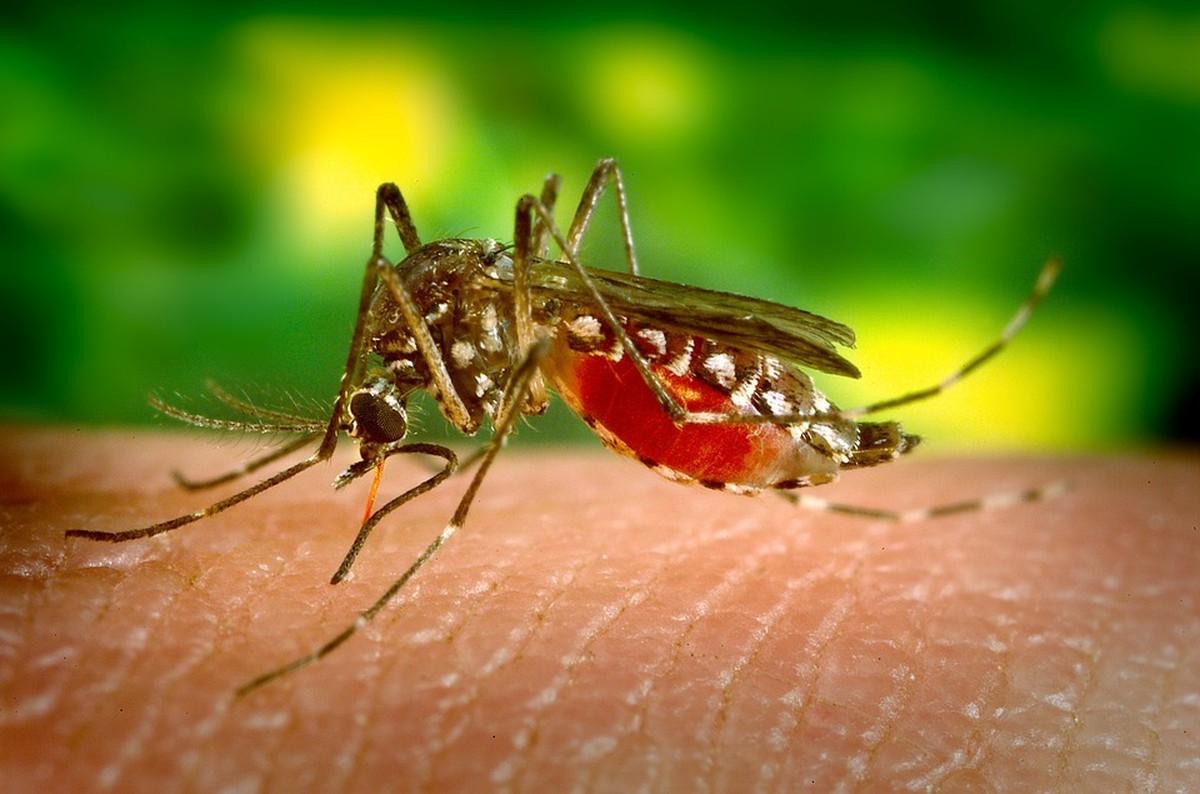 Brigada itinerante de combate ao Aedes aegypti está na cidade de Itabaianinha - G1