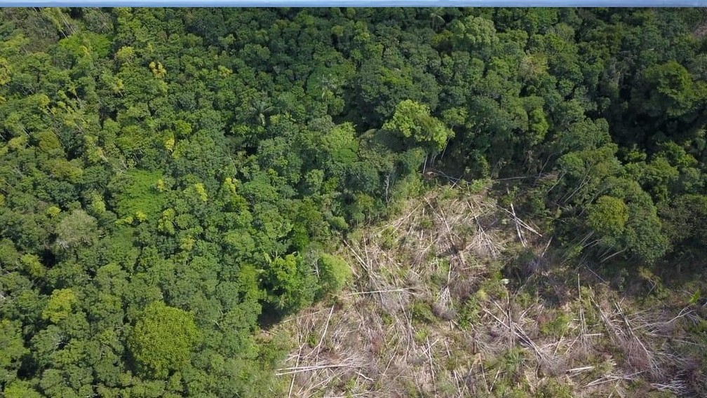 Produtor rural confessou ter derrubado floresta — Foto: Sedam RO/Reprodução