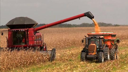 Safra deverá render mais de 35 mil toneladas de milho e soja em Alagoas