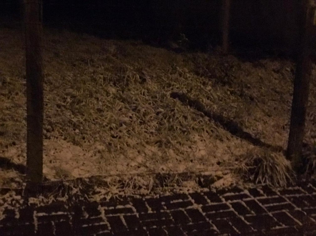 Vegetação coberta por neve em Urupema na Serra catarinense — Foto: Eduarda Demeneck/ NSC TV