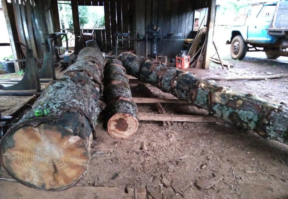 No total, foram recolhidos o equivalente a 2,1 metros cúbicos de toras de araucárias derrubadas sem autorização (Foto: Polícia Ambiental/Divulgação)