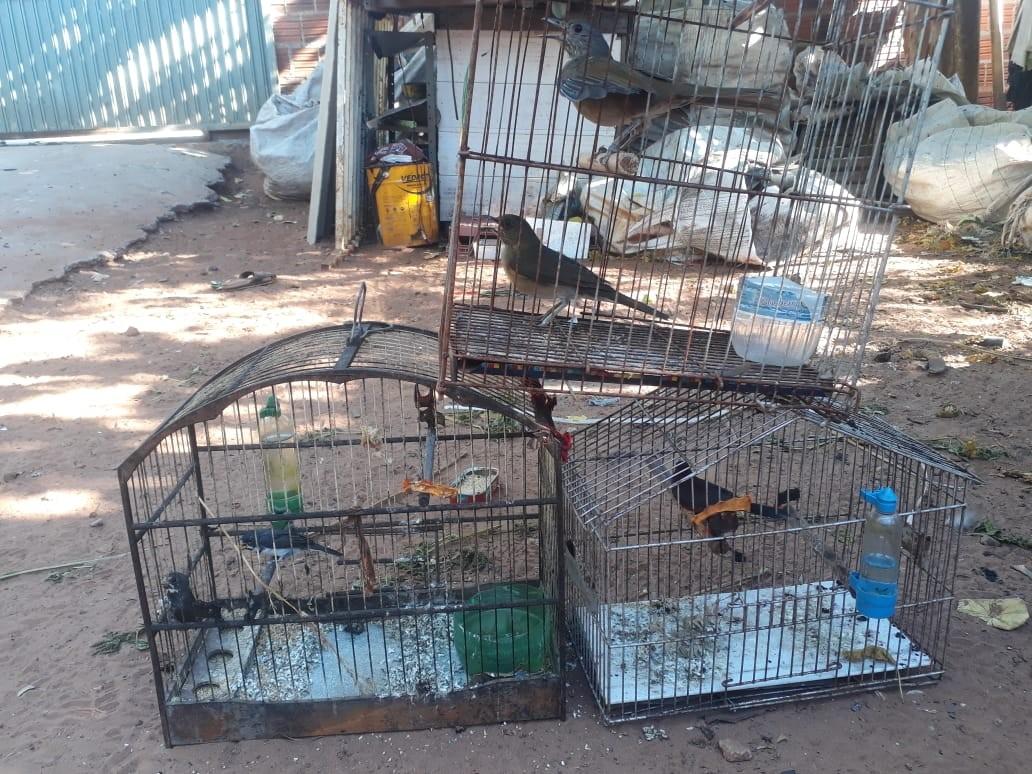 Após denúncia, Polícia Ambiental resgata cinco aves em cativeiro e aplica multa de R$ 2,5 mil