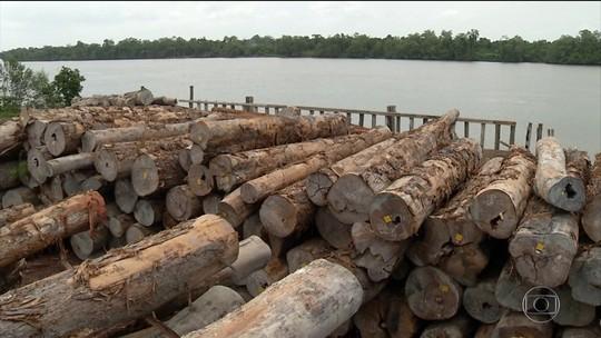 Multas por desmatamento chegam quase a R$ 1 bilhão no Pará