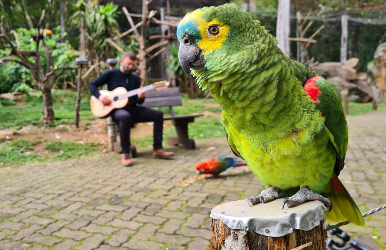 Aniversário de zoológico é comemorado com música ao vivo para os animais em Gramado