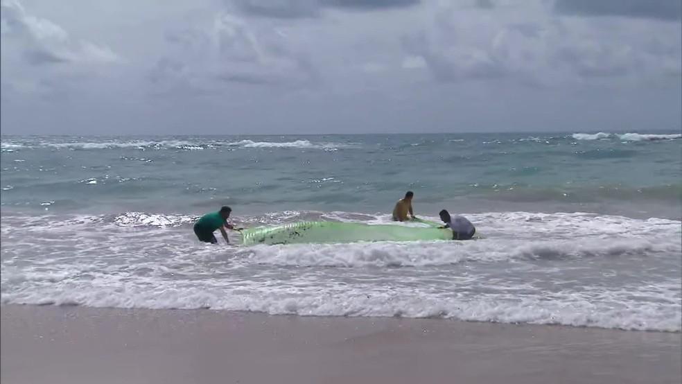 Voluntários retiram fragmentos de óleo de praias em Ipojuca, no Litoral Sul de Pernambuco  — Foto: Reprodução/TV Globo