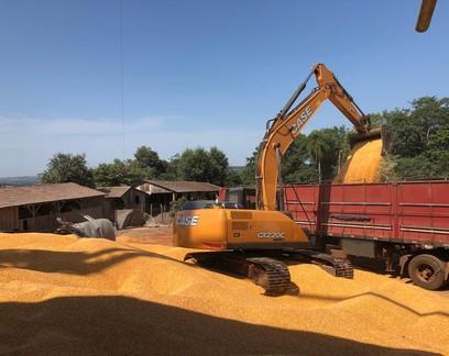 Conab abre edital para contratar transporte de milho e remover volumes em MT