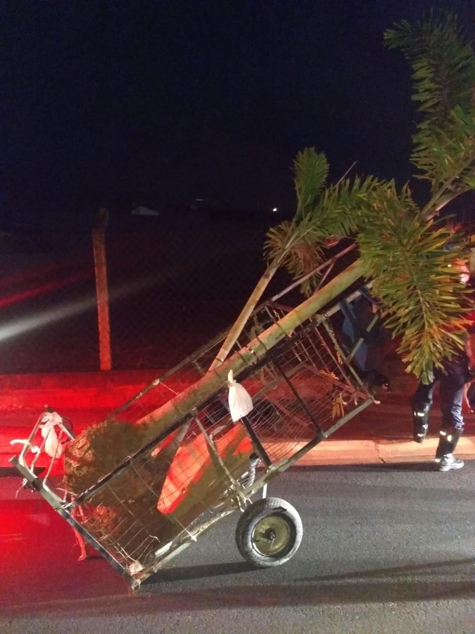 Dupla é presa por furtar pés de coqueiro de avenida em Tatuí
