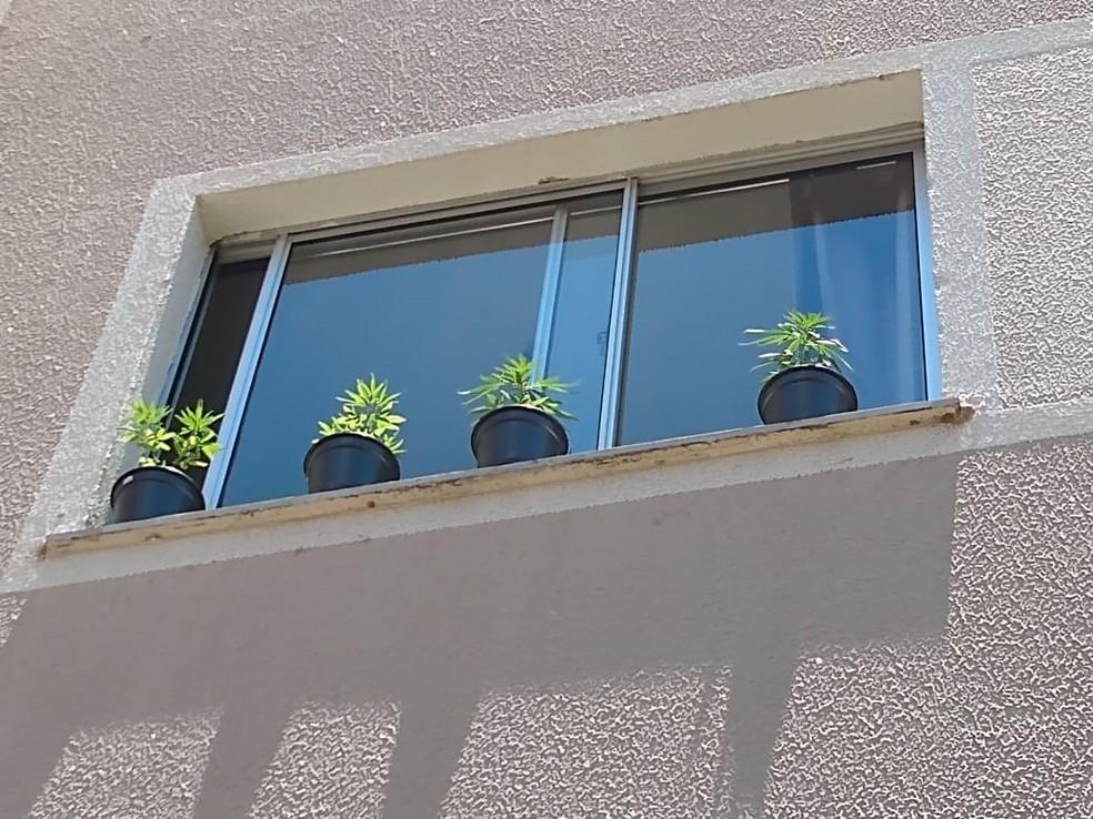 Vasos de maconha estavam na janela do apartamento da mulher — Foto: Arquivo Pessoal