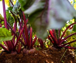 35 hortaliças para plantar no mês de maio
