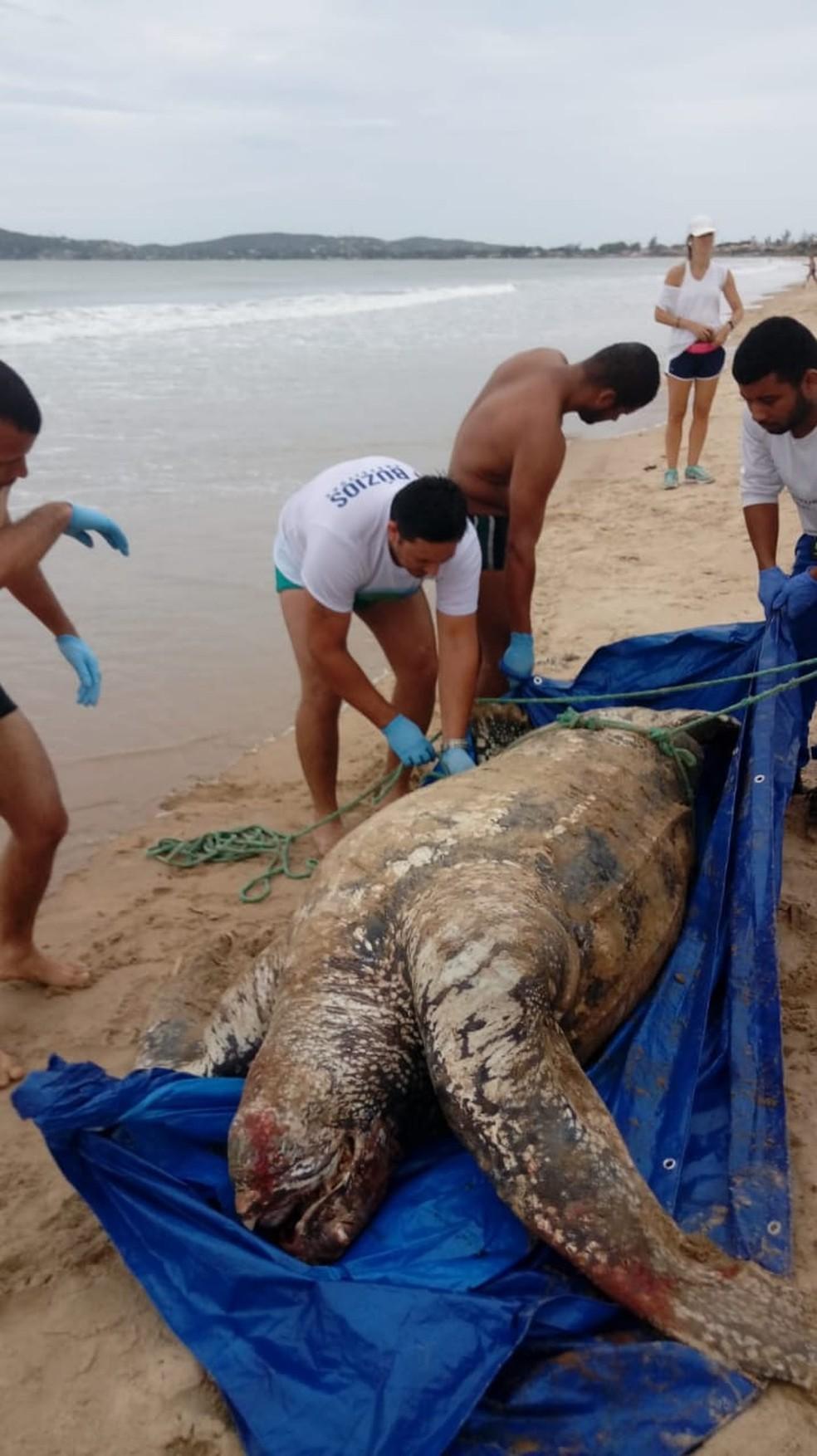 Animal foi levada para o centro do CTA em Araruama, no RJ  — Foto: Guarda Marítima Ambiental/Divulgação