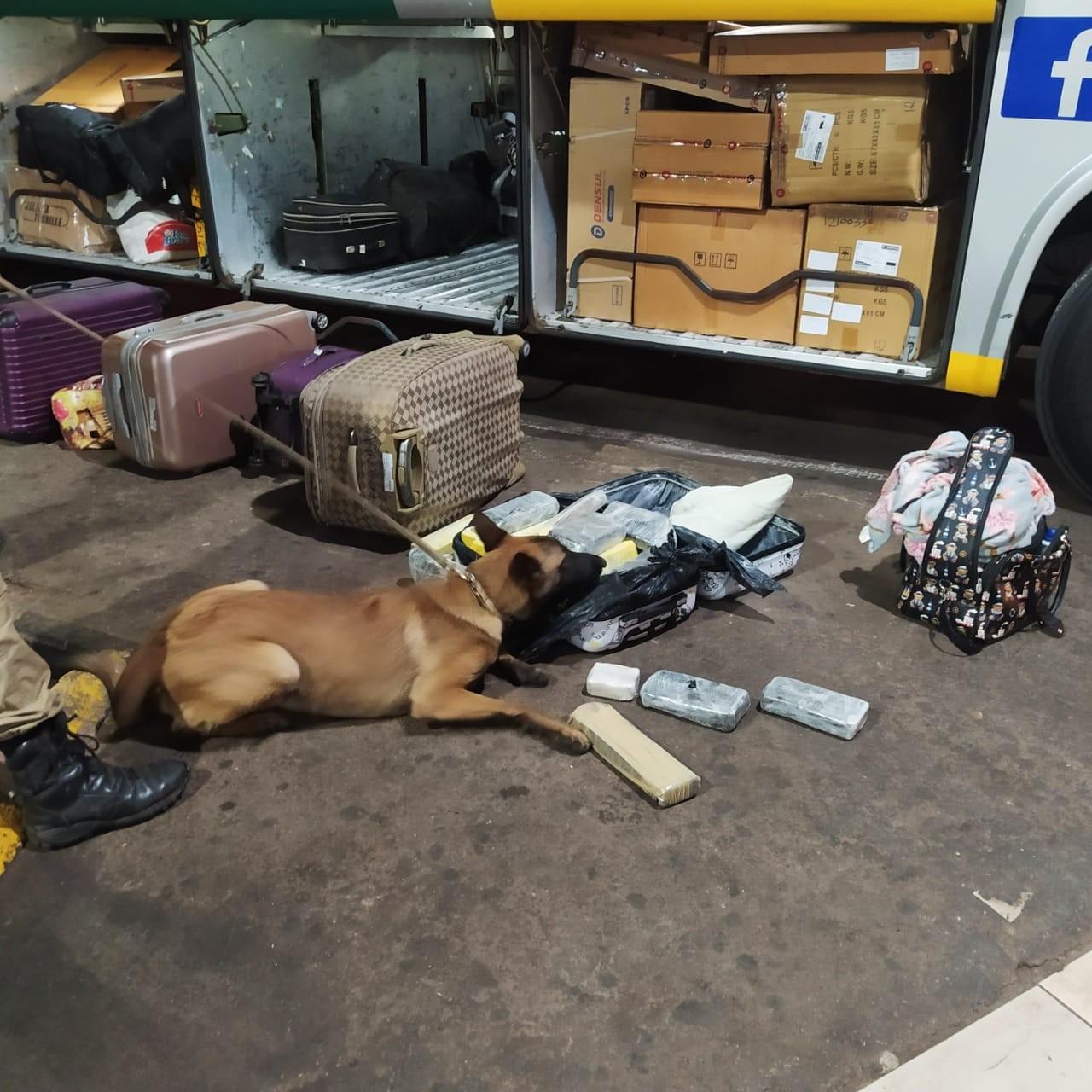 Mulher é presa por tráfico interestadual após cães da PM encontrarem mala cheia de drogas