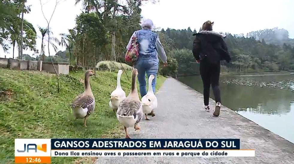 Avó e neta adestram gansos e levam para passeios em parque de SC: 'Nunca imaginei que ia virar rotina', diz aposentada; VÍDEO