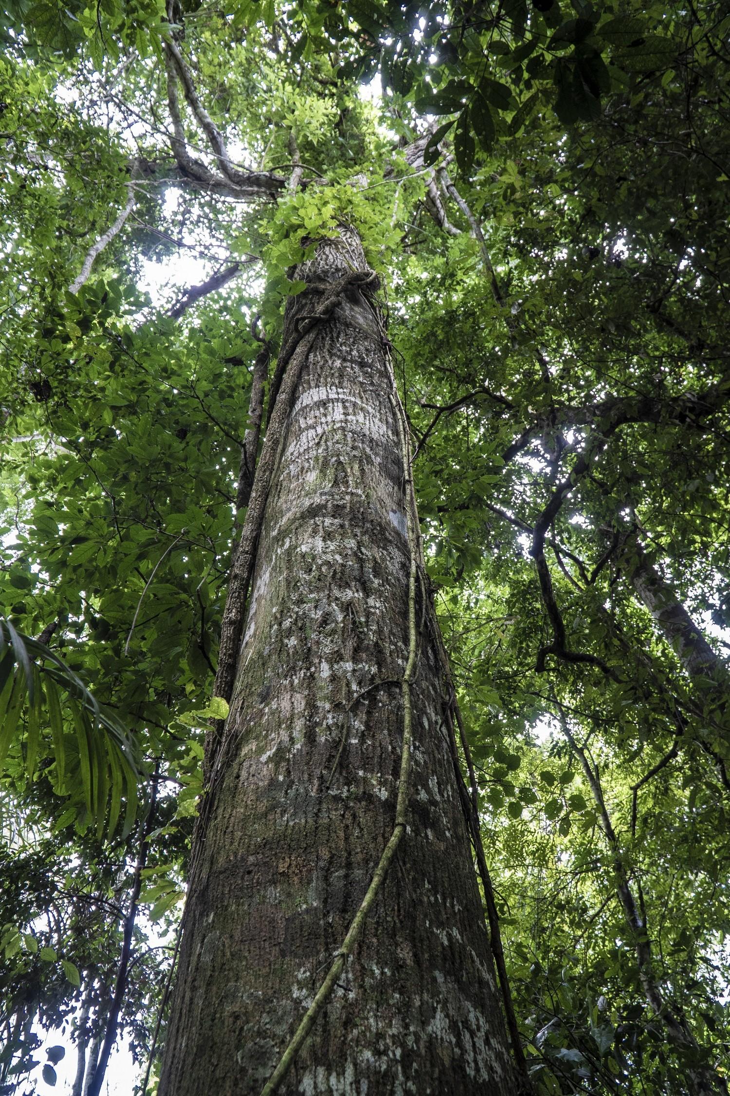 O Brasil, que concentra um terço da área de floresta tropical do mundo, é um dos maiores receptores de recursos do crédito de carbono (Foto: FERNANDO MARTINHO FOR PROPUBLICA, via BBC News Brasil)