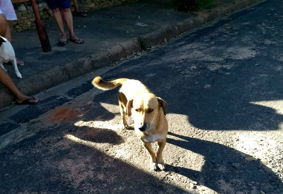 Cachorro 'avisa' vizinhos sobre incêndio e salva idosa que estava acamada na casa (Foto: João Trentini)
