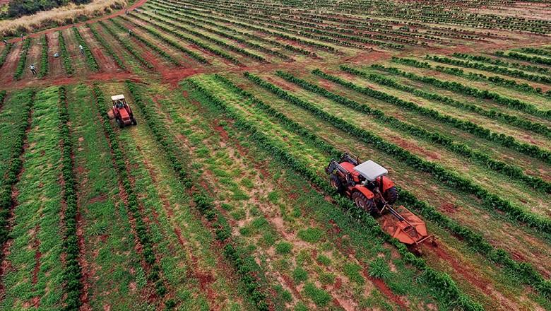 Fazenda O'Coffee: Trator roça o mato entre as linhas de lavouras de café (Foto: Rogerio Albuquerque)