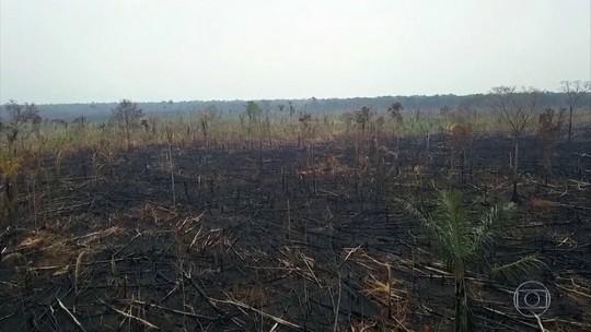 Áreas sob alerta de desmatamento na Amazônia dobram em novembro