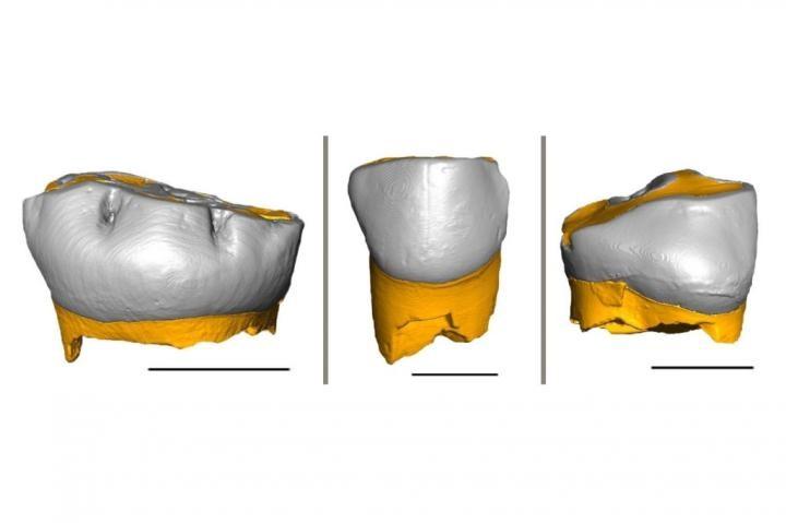 Reconstituição 3D dos dentes de recém-nascidos neandertais (Foto: Federico Lugli)