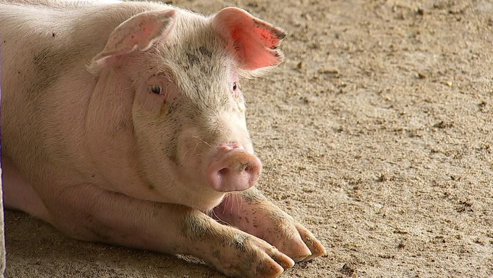 Preço do quilo de suíno em Porto Velho é de R$6,56 (Foto: Reprodução/ TV TEM)