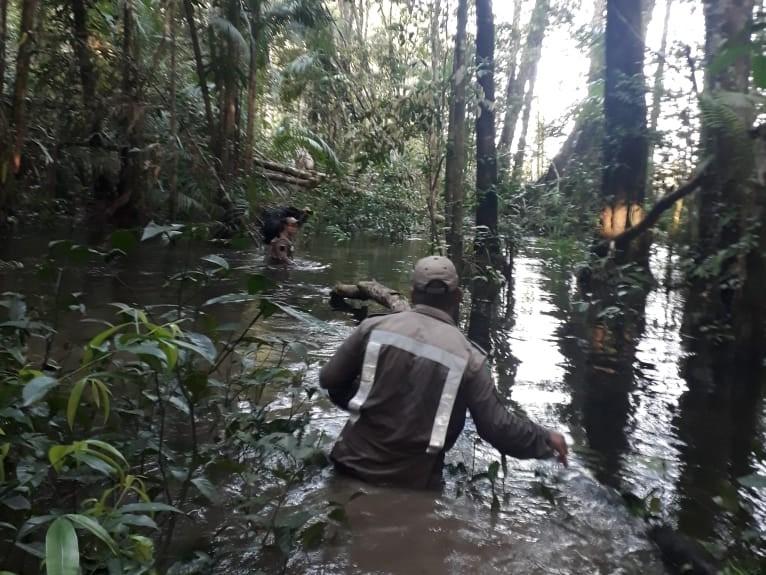 Adolescentes estão sumidos há 5 dias em floresta no AP após saírem para apanhar açaí