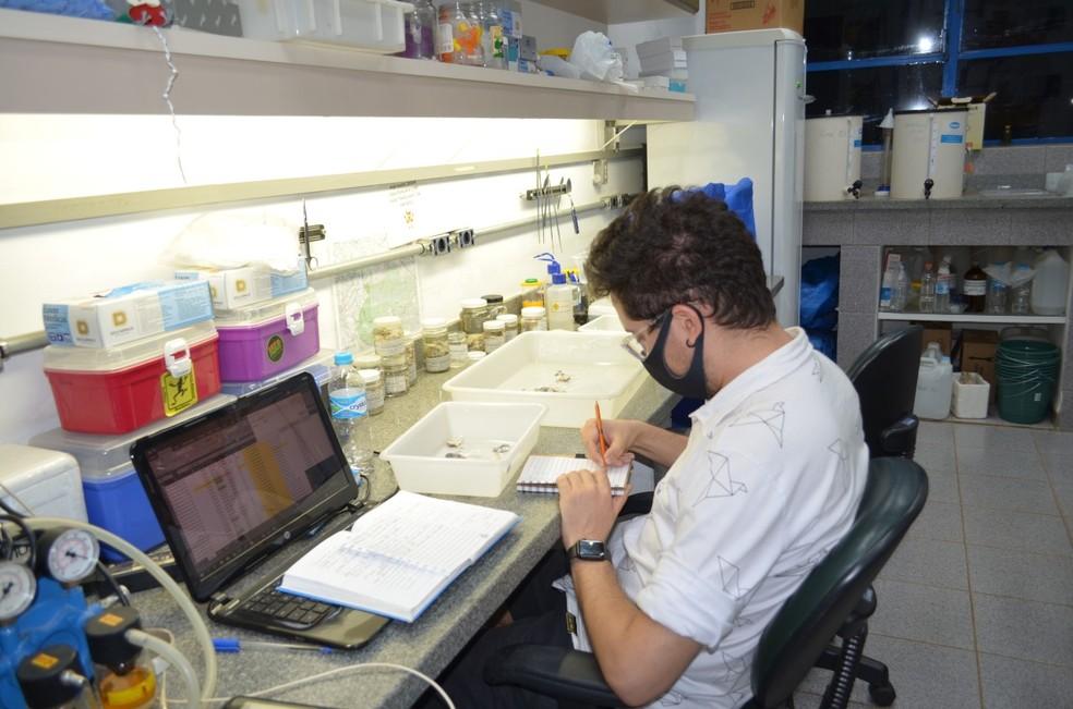 Felipe Andrade, taxonomista e doutor em biologia animal pela Unicamp — Foto: Arquivo pessoal