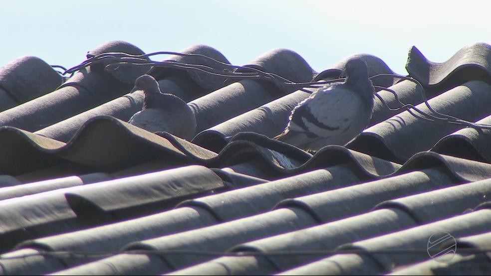 Parte do forro da creche municipal Padre Armando no Bairro Jardim Primeiro de Março, em Cuiabá, desabou por causa da quantidade de fezes e ninhos de pombos (Foto: TV Centro América)