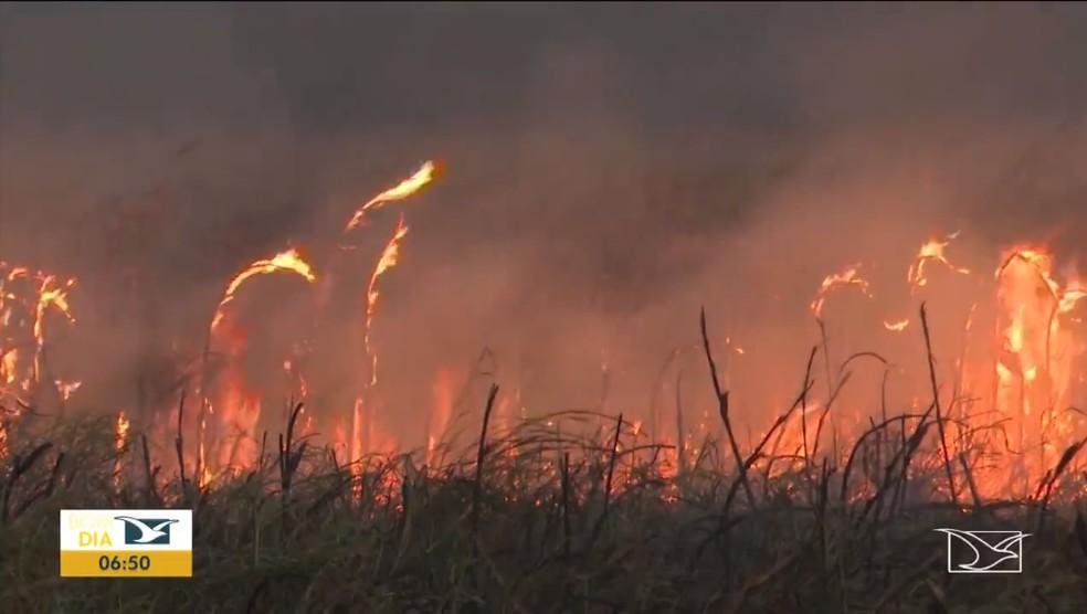 Aumenta o número de queimadas nas últimas 48 horas no Maranhão. — Foto: Reprodução/TV Mirante.