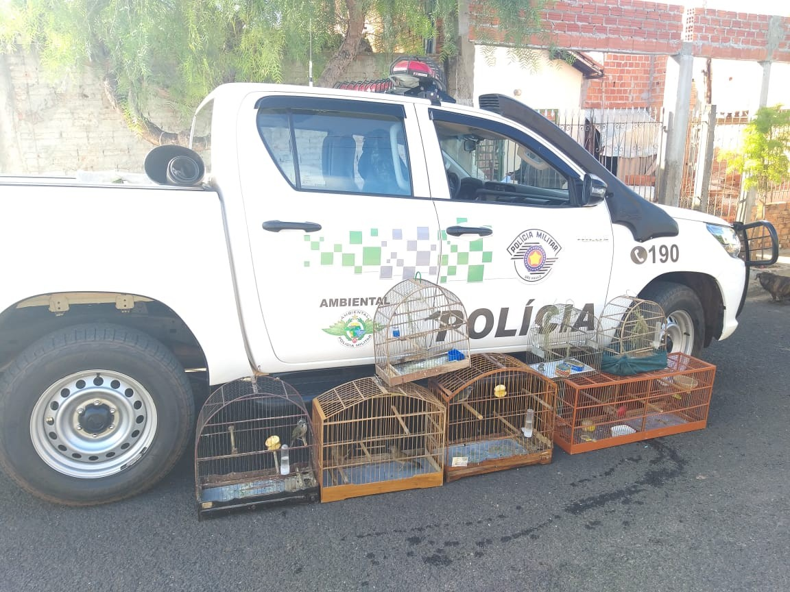 Morador de Rancharia leva multa de R$ 4 mil por manter aves silvestres em cativeiro