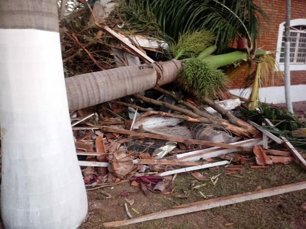 Com impacto da batida, coqueiros caíram  (Foto: Arquivo Pessoal )