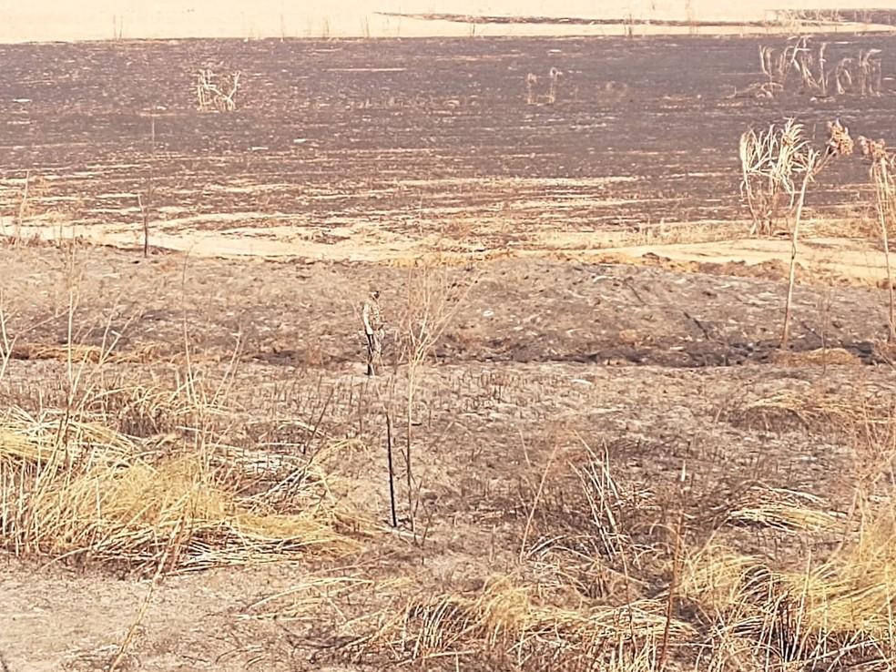 Focos de queimadas  em fazenda em Queiroz (SP) foram captados por um satélite — Foto: Polícia Ambiental/ Divulgação