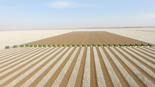 Força-tarefa reúne quase 30 colheitadeiras na colheita do algodão em fazenda de MT