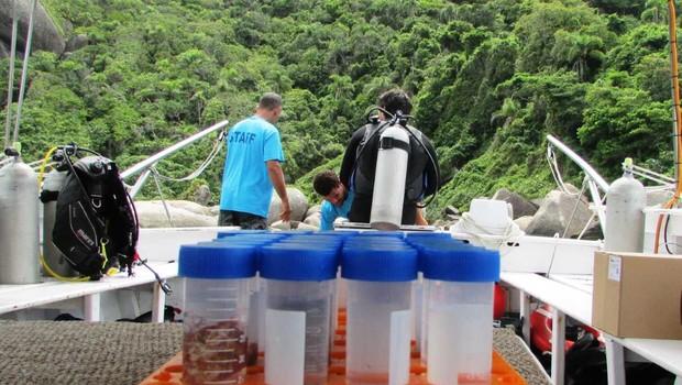 Amostras coletadas do mar para pesquisas na Regenera (Foto: Divulgação)