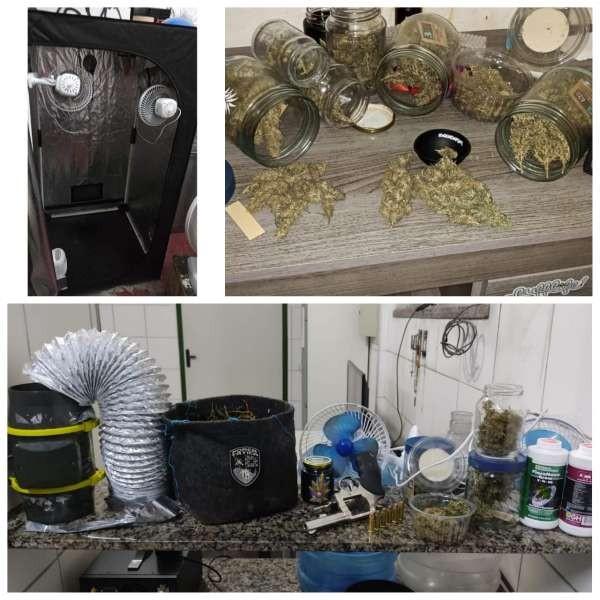Imóvel utilizado como estufa de maconha é desativado em Fortaleza, e duas pessoas são presas