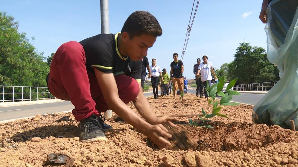 Projeto de arborização planta mais de 500 mudas em avenida recém-asfaltada de Ariquemes — Foto: Rede Amazônica/Reprodução
