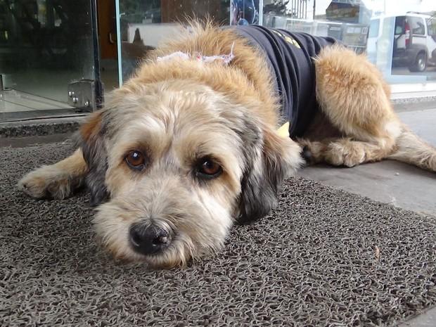 Cachorro Pitoco vive em um posto de gasolina na Zona Norte de SP (Foto: Paulo Toledo Piza/G1)