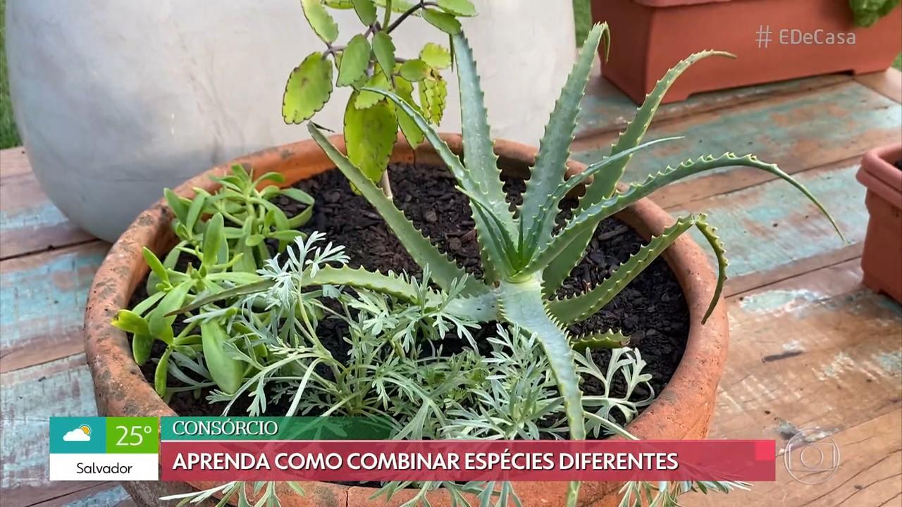 Consórcio de plantas: Aprenda a cultivar várias espécies no mesmo vaso